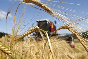 Ростовская область вышла на первое место по урожаю ранних зерновых